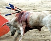 Against Bullfighting