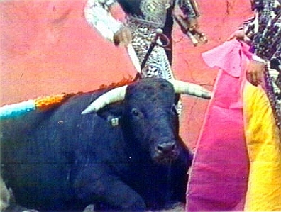 Cruel Sports - Bullfighting